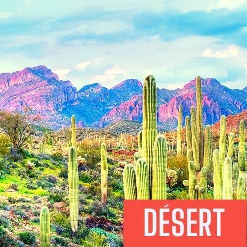 desert son z