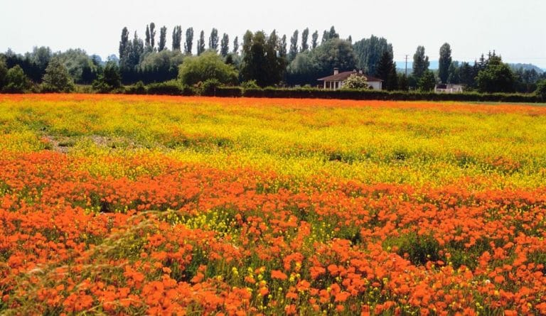 spring season with field full of flowers